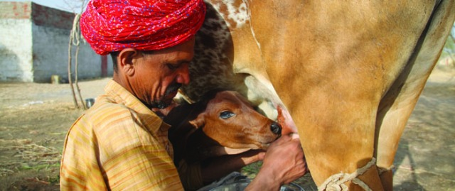 India, Rajasthan, Tonk district, Nagar village
